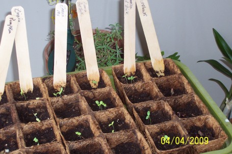 Spring 2009 Seeds